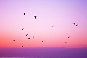 paars-kleur
